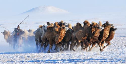 给你来内蒙古过冬的理由