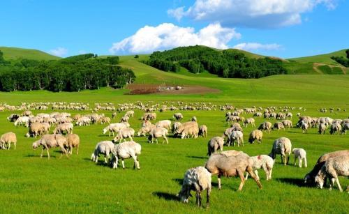 春节前后牛肉价格会大涨吗?12月9日全国牛肉价
