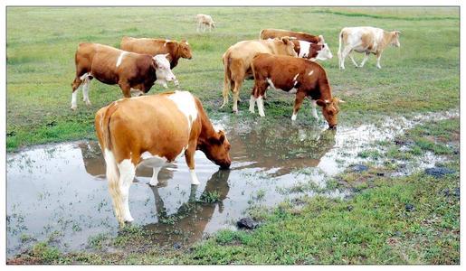 12月份第1周畜产品和饲料集贸市场价格情况