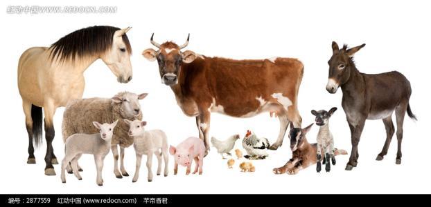 藏牛羊肉在上海农展会获认可 正积极进入上海市场
