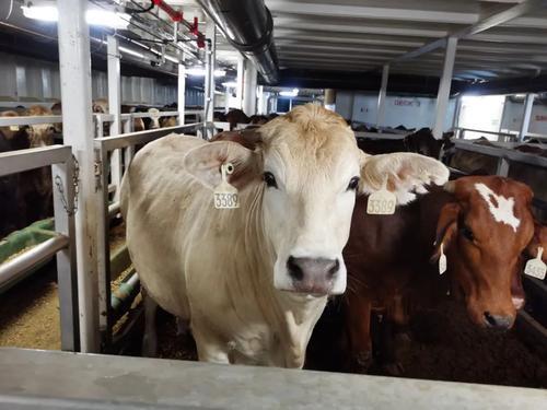 """""""零关税""""的澳大利亚牛肉来了!市民排长龙抢购,价格引起网友羡慕"""