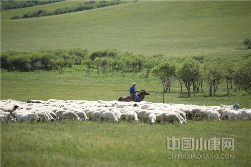 内蒙古牛羊肉文化之如何放羊