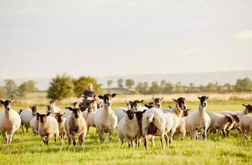 未来两年内我国肉羊市场看好