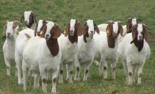 """猪价""""雪崩"""",鸡蛋跌破成本,活羊一只亏200,养殖业寒冬来了?"""