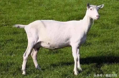 羊价突变?9月14日 全国最新活羊价格