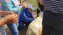 内蒙古:落实绒山羊提质增效重大技术协同推广项目